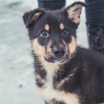 Полкаша - Собаки в добрые руки
