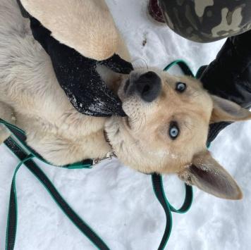 Арий - Собаки в добрые руки