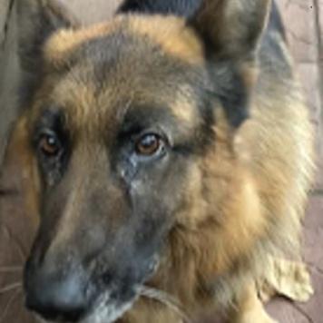 Гермес - Собаки в добрые руки