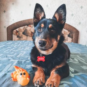 Мона - Собаки в добрые руки