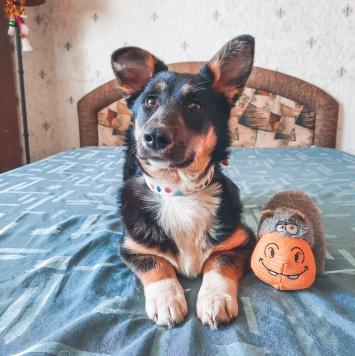 Твигги - Собаки в добрые руки