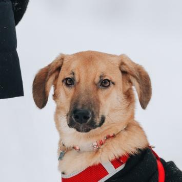 Марвел - Собаки в добрые руки