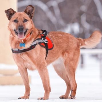 Динка - Собаки в добрые руки