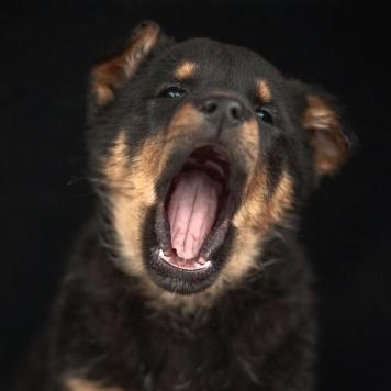Рольфик - Собаки в добрые руки
