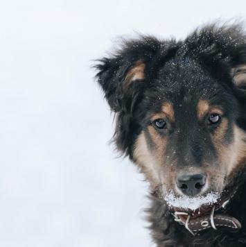 Щенок Яша - Собаки в добрые руки