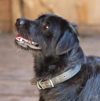 Чарли - Найденные собаки