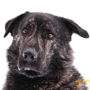 Сан-Педро - Собаки в добрые руки