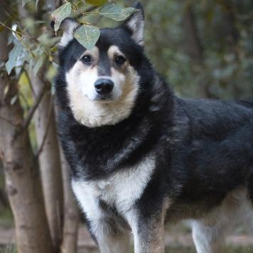 Жульен - Собаки в добрые руки