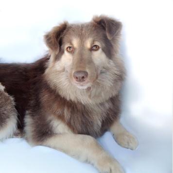 Тэффи - Собаки в добрые руки