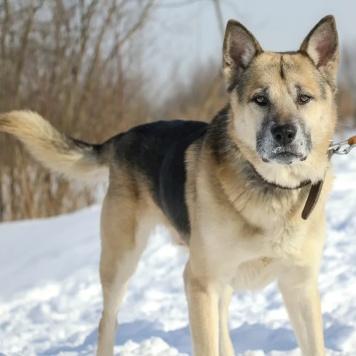 Лоббо - Собаки в добрые руки