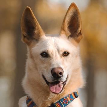 Марфин - Собаки в добрые руки