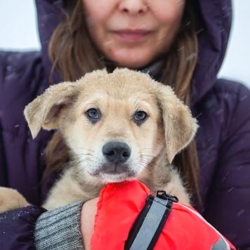 Юви - Собаки в добрые руки