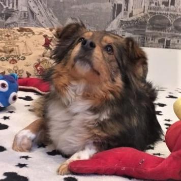 Мэрилин - Собаки в добрые руки