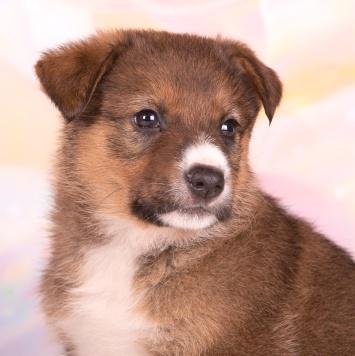 Буррито - Собаки в добрые руки