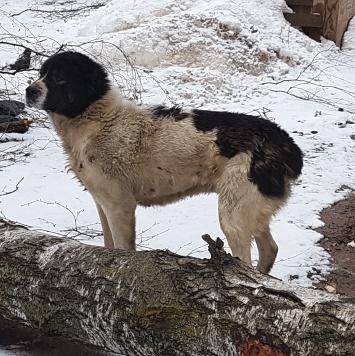 Неизвестно - Найденные собаки