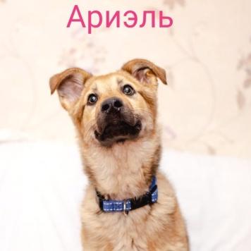 Ариэль - Собаки в добрые руки