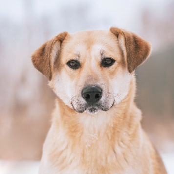 Рэй - Собаки в добрые руки