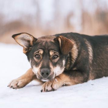 Грэй - Собаки в добрые руки