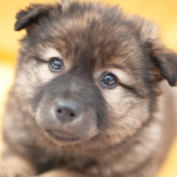 Василиса - Собаки в добрые руки