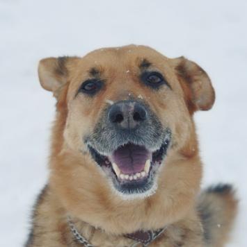 Геля - Собаки в добрые руки