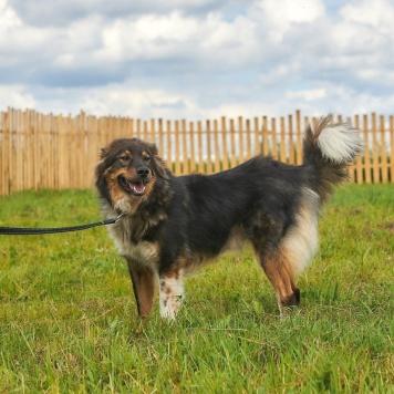 Фёдор - Собаки в добрые руки