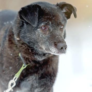 Шаня - Собаки в добрые руки