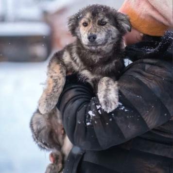 Джим - Собаки в добрые руки