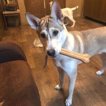 Лёня - Собаки в добрые руки