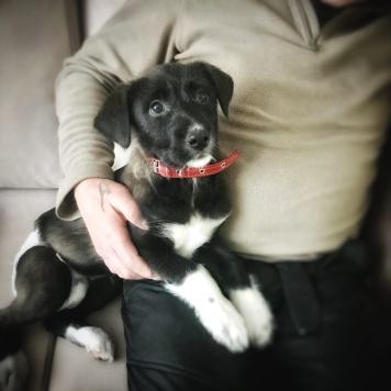 Милаша - Собаки в добрые руки