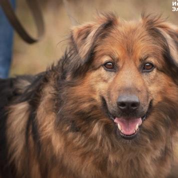 Цезарь - Собаки в добрые руки