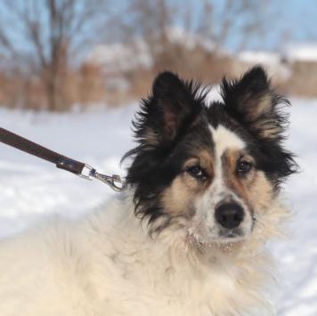 Ванька - Собаки в добрые руки