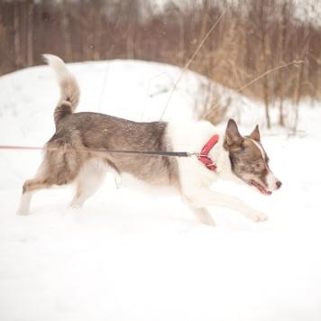 Афина - Собаки в добрые руки