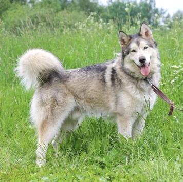 Пегас - Собаки в добрые руки