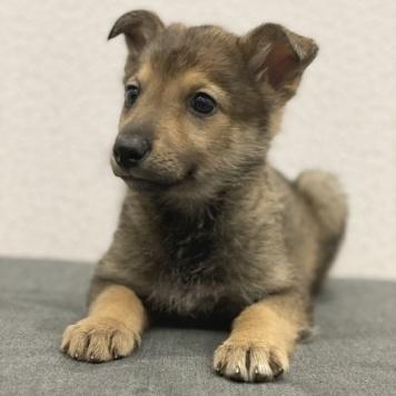 Чита - Собаки в добрые руки