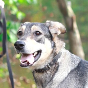 Фантик - Собаки в добрые руки