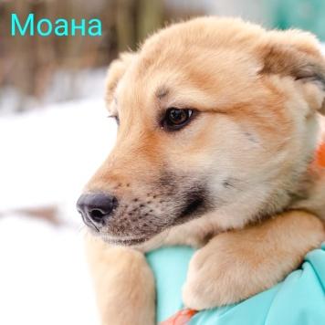 Моана - Собаки в добрые руки