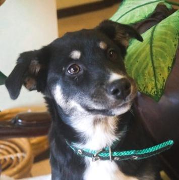 Хэппи - Собаки в добрые руки