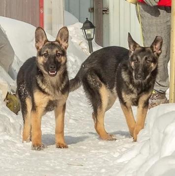 Эля и Эма - Собаки в добрые руки