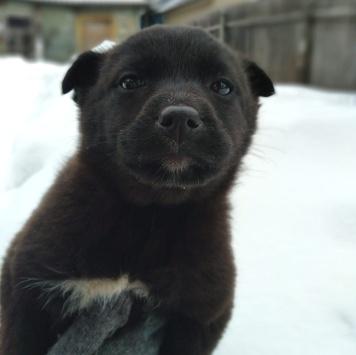 Бурундучки - Собаки в добрые руки