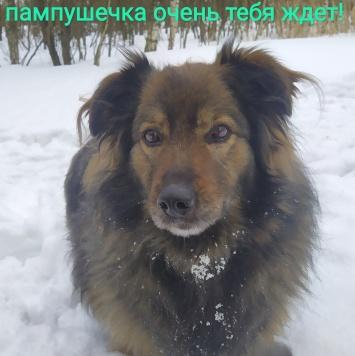 Акиша - Собаки в добрые руки