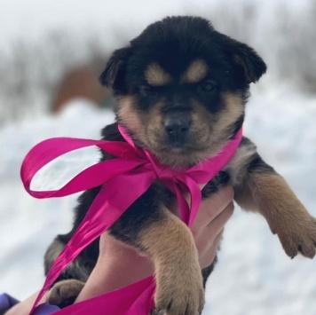 Щенки-карапузики - Собаки в добрые руки
