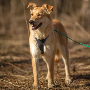Манго - Собаки в добрые руки