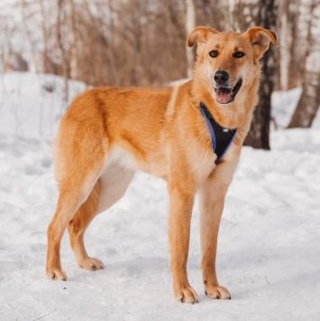 Линга - Собаки в добрые руки