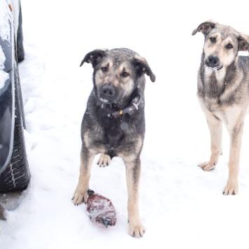 Рикки и Фёдор - Собаки в добрые руки