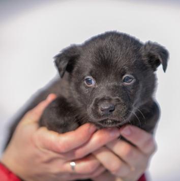Амурчик - Собаки в добрые руки