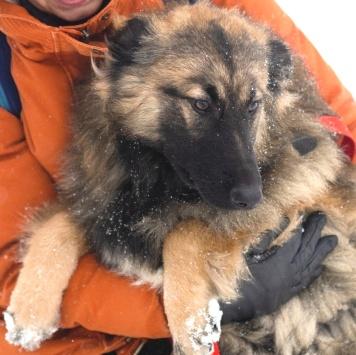 Пуффи - Собаки в добрые руки