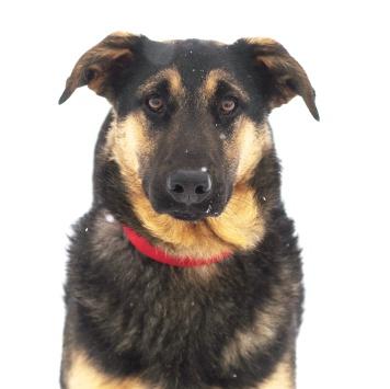 Нежа - Собаки в добрые руки