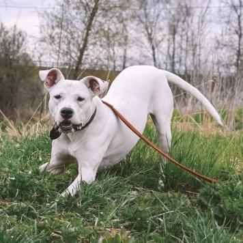 Тарта - Собаки в добрые руки