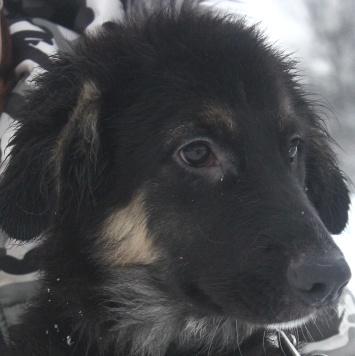 Поль - Собаки в добрые руки