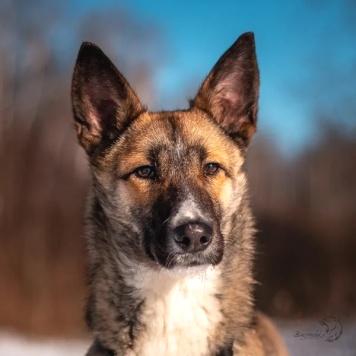 Кайра - Собаки в добрые руки